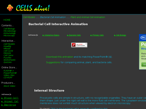 Bacterial Cell Interactive Animation