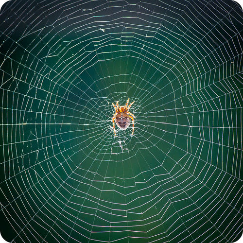 A species of spider in its web