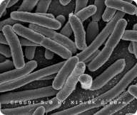 Bacteria Nutrition