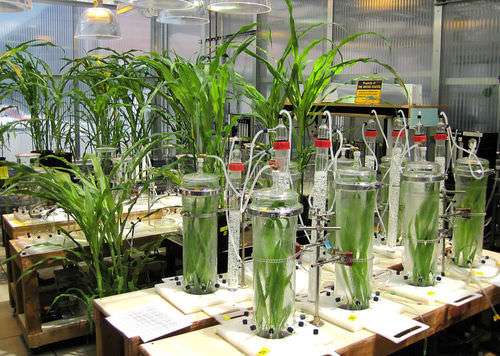 Laboratory experiment studying plant growth
