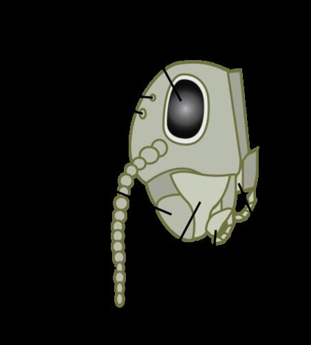 Parts of an arthopod head