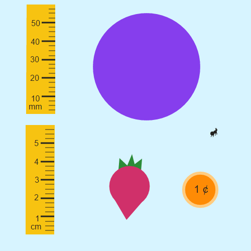 Comparison of Metric Measurements: Millimeters and Centimeters