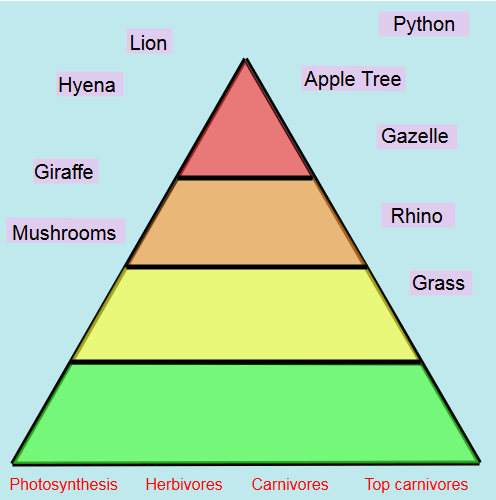 Ecosystems: Food Chain Pyramid