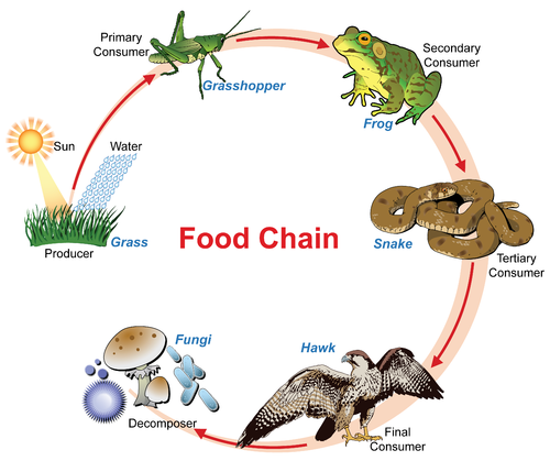 Organisms That Produce Their Own Food Are Called