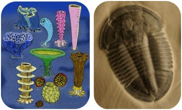 Illustration of reef-building sponges, and a fossil of a trilobite