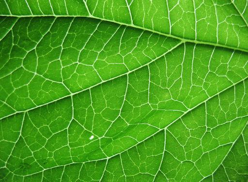 Estructura Celular De Plantas Ck 12 Foundation