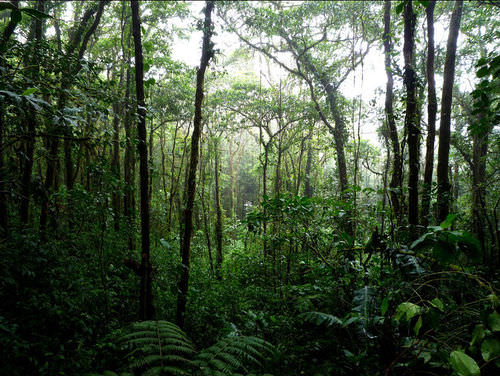 Tropical rainforests are a humid terrestrial biome