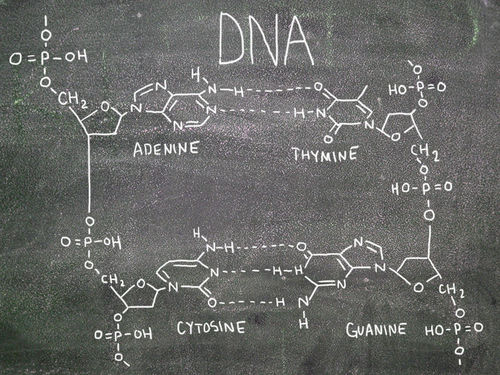 4.3 DNA Structure and Replication