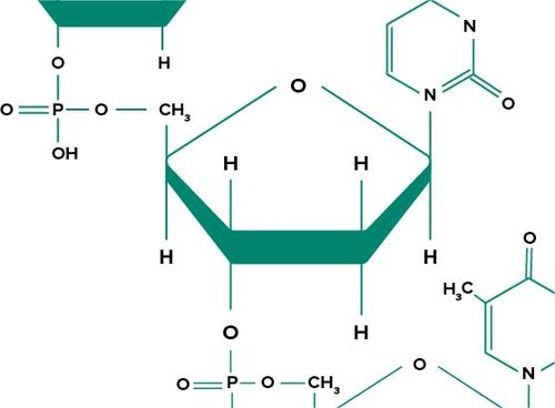First Organic Molecules