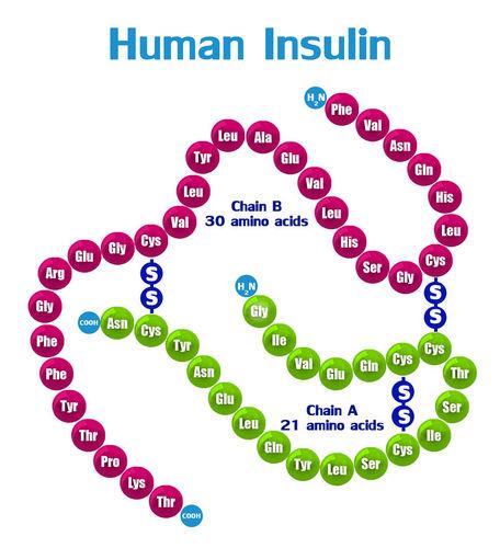 Bead represents a different amino acid just 20 different amino acids