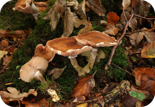 "Giant ""humongous fungus"" can cover vast areas"
