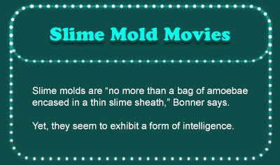 Slime Mold Movies