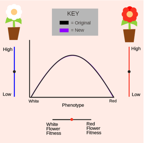 Natural Selection: Directional Selection of Flower Colors