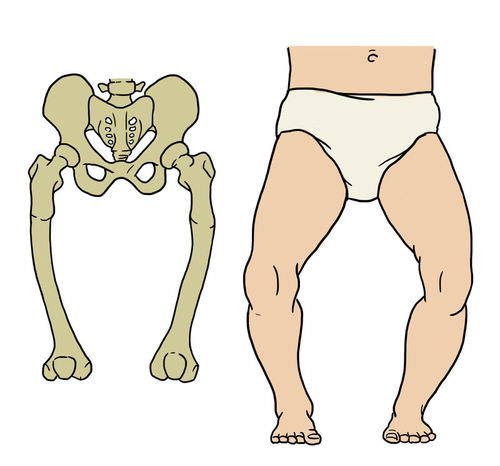 The Skeletal System | CK-12 Foundation