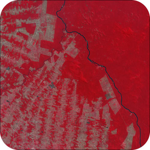 Deforested swatches in Brazil show up as gray amid the bright red tropical rainforest