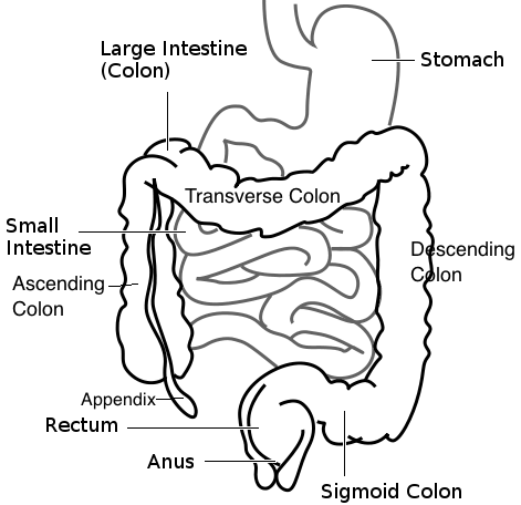 Unit 9: Digestive System Structures & Functions | CK-12 ...
