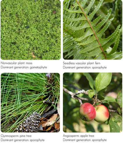Images of plants in dominant generation in their life cycle