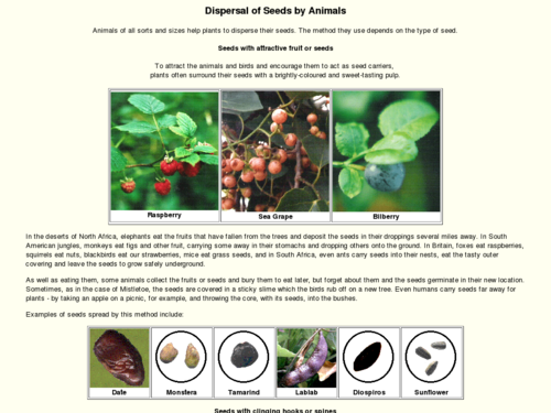 Dispersal of Seeds by Animals