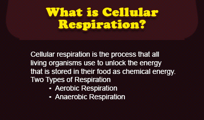 Cellular Respiration Explained