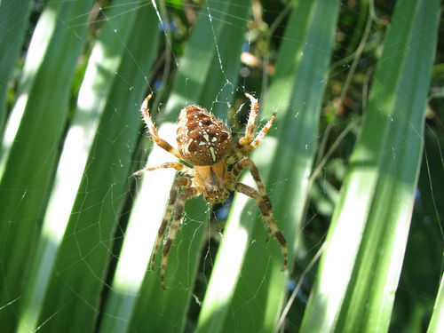 Spiders are one type of arthropod
