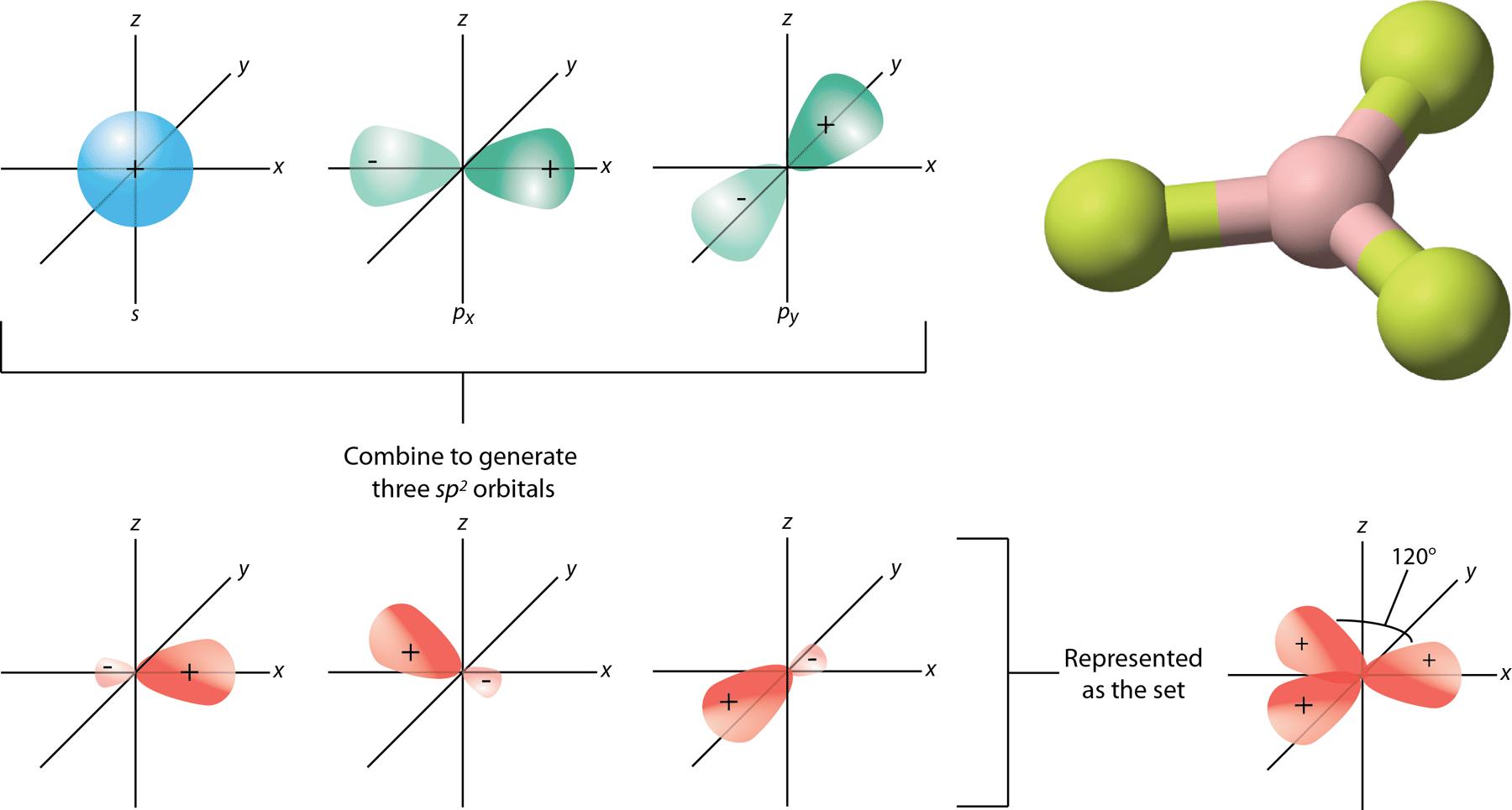Image of how s and p orbitals combine to form sp2 orbitals