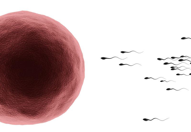 Human Egg Cells
