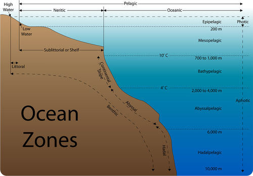 Diagram of the vertical and horizontal ocean zones