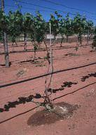 Drip irrigation helps save water