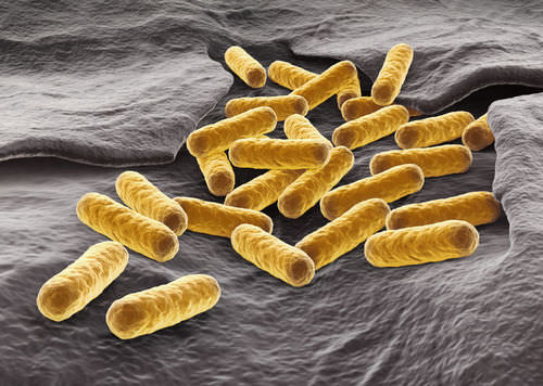 Introduction to Bacteria - Advanced