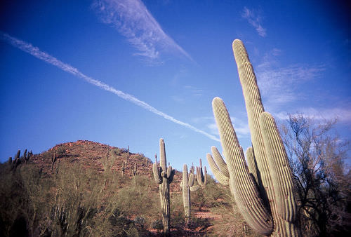 The Baja desert is an example of an ecosystem