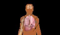 Blood Diseases Quiz - MS LS
