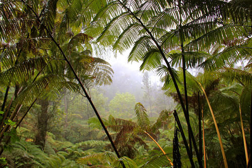 This tropical rainforest has different plants than those found in a desert