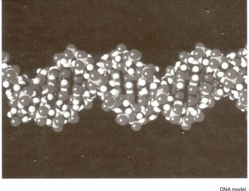 Gene Expression DNA Codes for Proteins