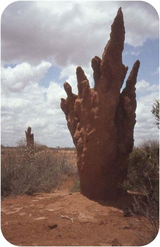 The air-conditioning efficiency of this termite mound was the inspiration for the Eastgate Centre