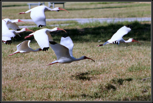Función Y Estructura De Las Aves Ck 12 Foundation