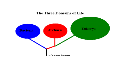 Domains of Life