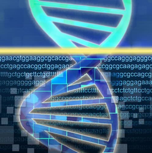 The DNA Double Helix - Advanced