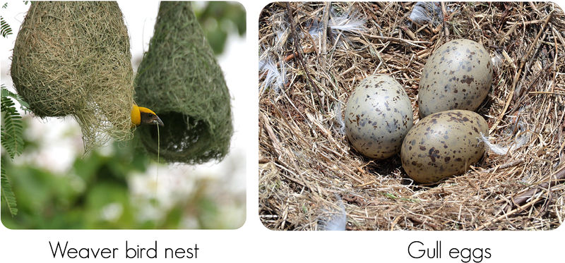 Variation in bird nests