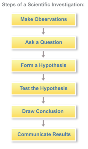 A simple summary of the steps of a scientific investigation