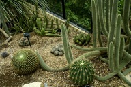Garden with cactus that need very little water