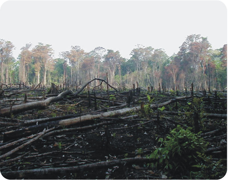 Habitat Destruction   CK-12 Foundation