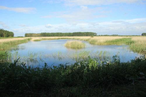 These wetland reeds represent a habitat