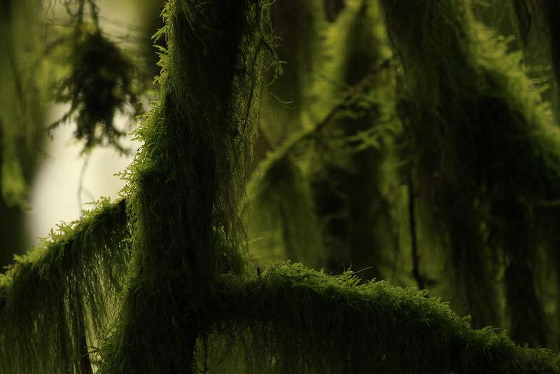 9 7 Nonvascular Plants Biology Libretexts