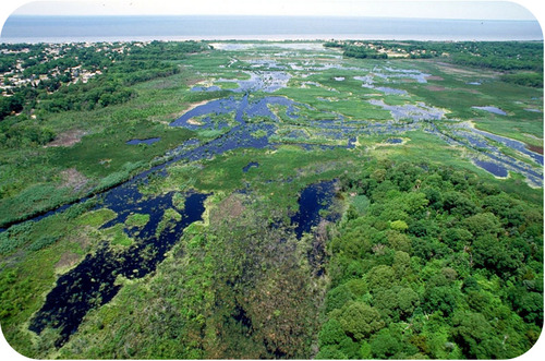 Wetlands help to filter water and protect coastal lands from storms and floods