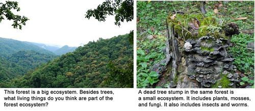 A forest and tree stump are both ecosystems