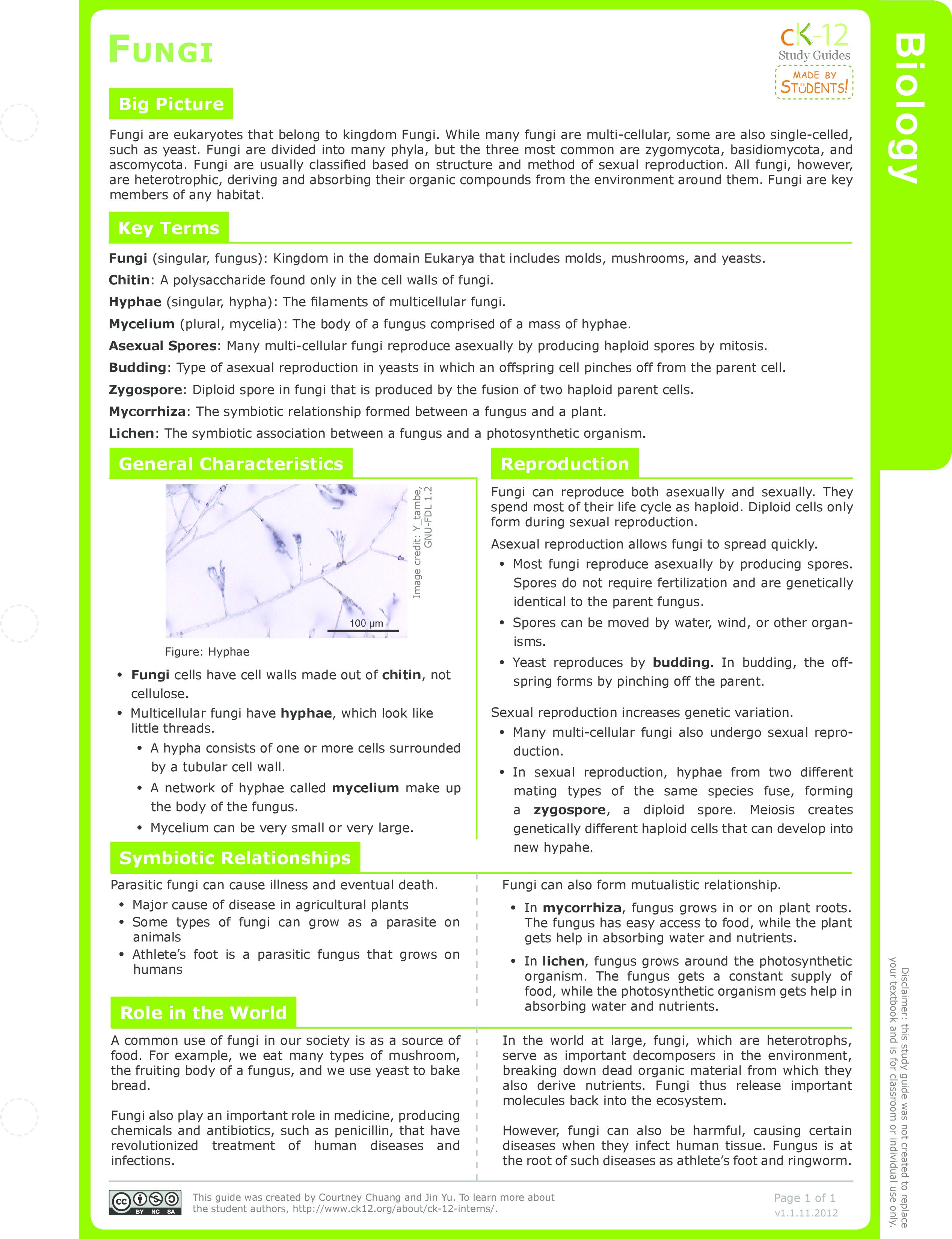 worksheet Fungi Worksheet fungi structure ck 12 foundation study guide