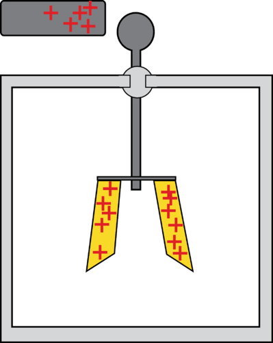 Electroscope that has been positively charged by induction
