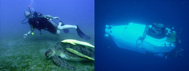 Types of Marine Organisms