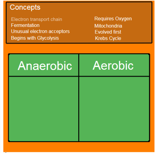 Anaerobic vs Aerobic Respiration: Types of Respiration