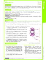 Mammals Study Guide